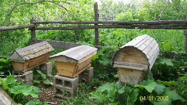 inspired beehives