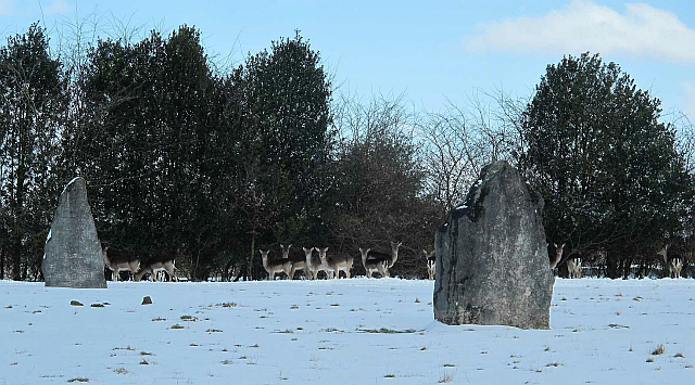 Deer People of Beech Hill